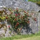 www-blackwatercastle-com-walled-garden-2